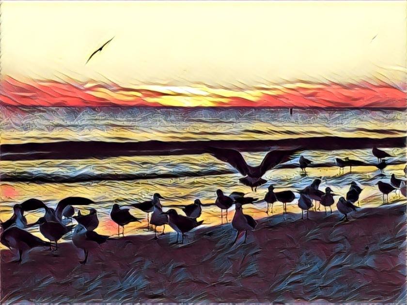 artsy-lido-birds