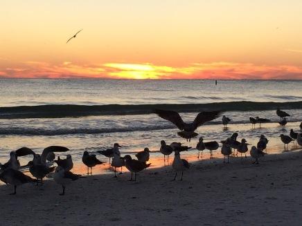 original-lido-birds